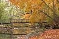 Fall Bridge 1