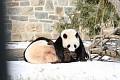 070216 Natl Zoo097
