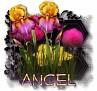 Angel - 3094