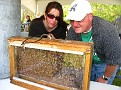 """Jersey Cape Beekeepers Association """"Bee Booth""""..."""