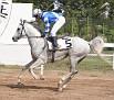 YPSELON (Drakon x Phaija) 2003 grey stallion