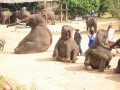 Mae Ping Elephant Camp near Chiang Mai in Northern Thailand Day 12 Feb 23-2006 (79)