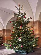 Tannenbaum im Rathaus