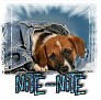 1Nite-Nite-blujeanpup