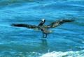 Beach Birds-01
