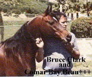 COMAR BAY BEAU++ 1963-1982 bay stallion (Azraff x Rose of Mirage, by Al-Marah Ibn Indraff) Bred by Garth Buchanan