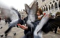 Pigeons surround a young tourist visiting Saint Mark's square in the Italian city of Venice.