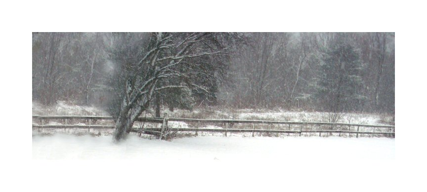 Trees In Snow @ 2009 Valerie Jagiello