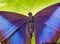 OwlButterfly003
