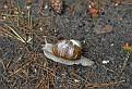 Улитка Snail  DSC6525 332