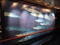 Decks 12/11 Fwd Stairwell - Norwegian Gem
