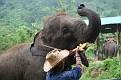 Mae Taeng Elephant Park Show (105)