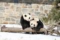 070216 Natl Zoo024