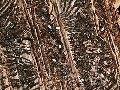 Spuren des Baumtodes