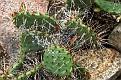 Tautropfen in Kakteen_Dewdrop in cacti (IMG 0231 i2e)